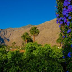BEST WESTERN PLUS Las Brisas Hotel Palm Springs 