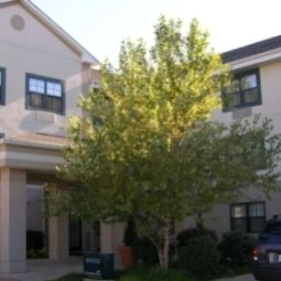 Widok zewntrzny Extended Stay America Washington D.C. - Alexandria - Landmark Fotos