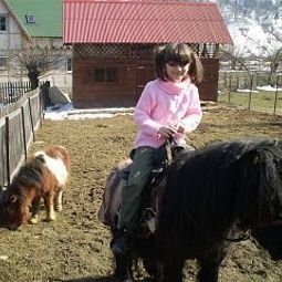 House with ponies Moeciu de Jos Brasov