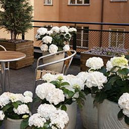 Terrasse Clarion Collection Wellington Non-smoking Hotel Fotos