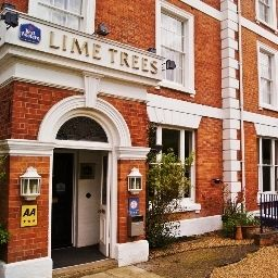 Lime Trees Fotos